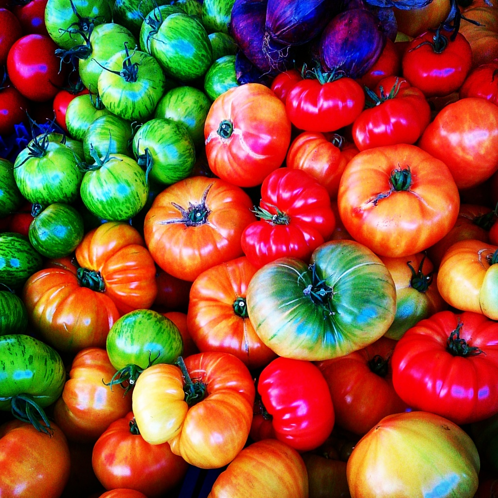 Beautiful array of colours of tomatoes