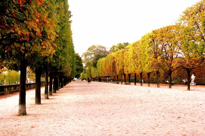 The pretty colours of autumn in the Jardin des Tuileries.