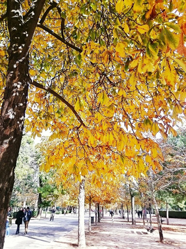 Autumn in the Parque del Retiro