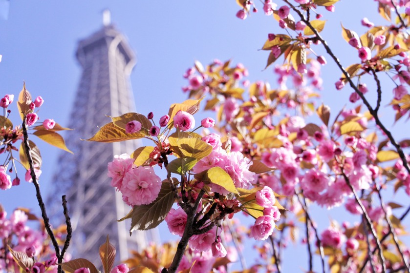 Eiffel Tower with Blossom, Spring in Paris