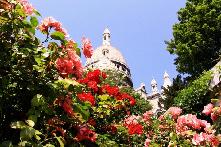 Roses at Sacré-Cœur,Montmartre