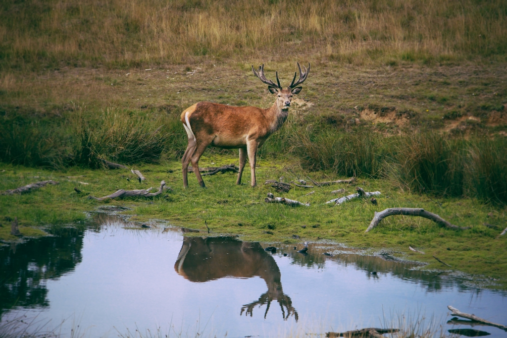 The magnificent Deer of Richmond Park, London - Deer Photography, nature photography